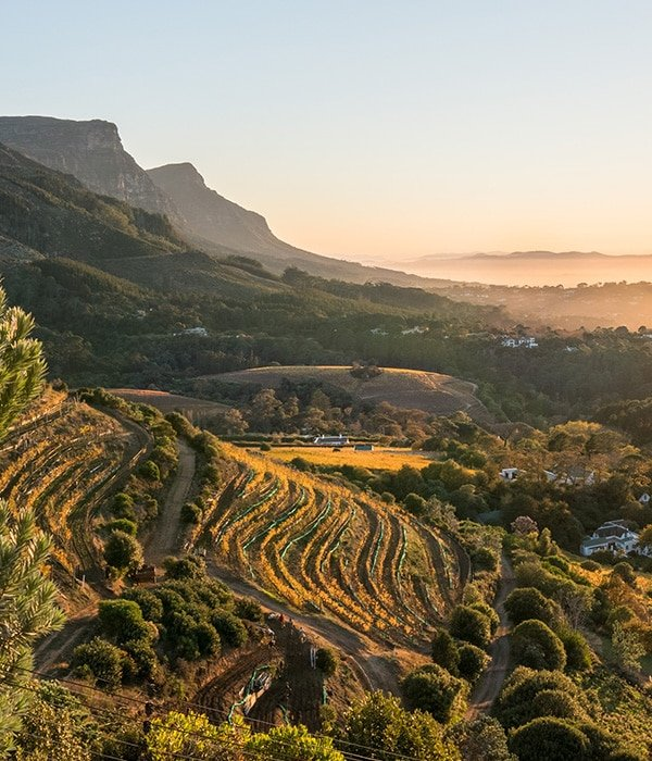 The Cape Winelands 3