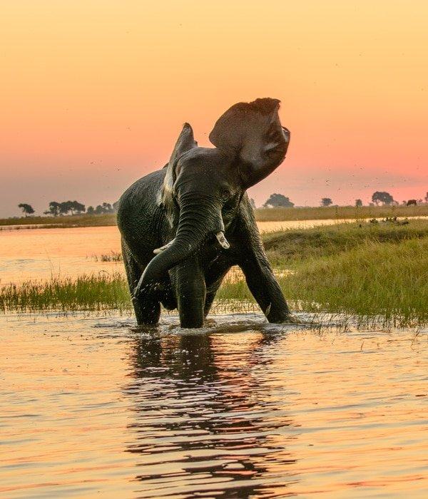 Chobe National Park 2