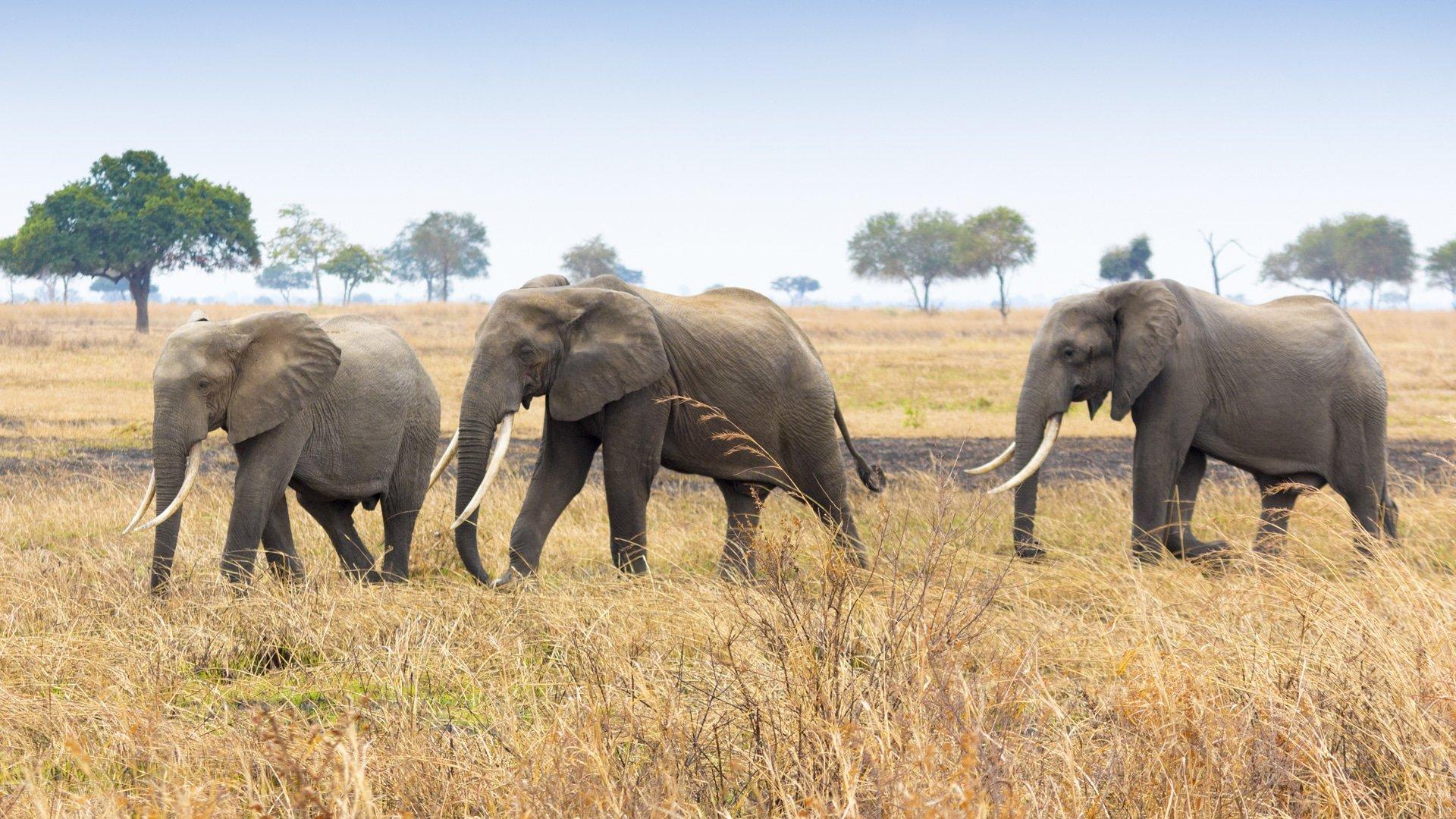 Zululand Rhino Orphanage & Manyoni 3