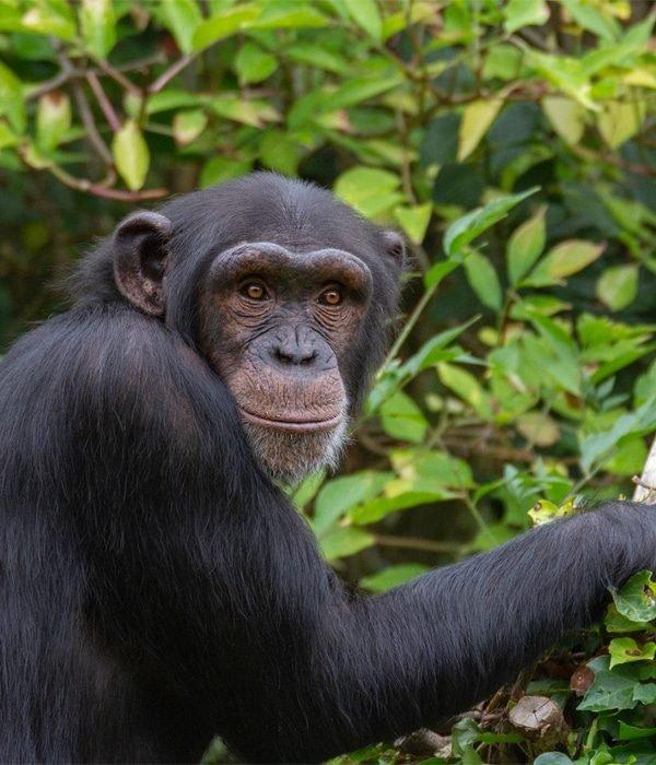 Rwanda 18