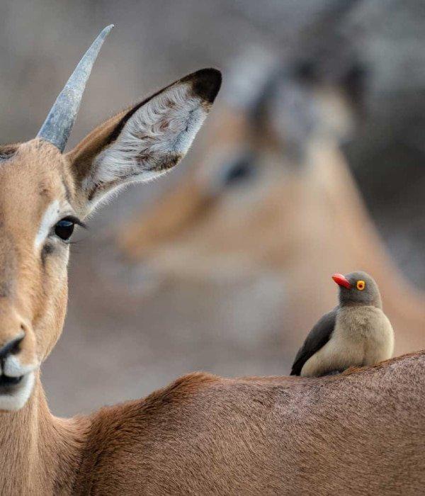 Kruger & Greater Kruger 4