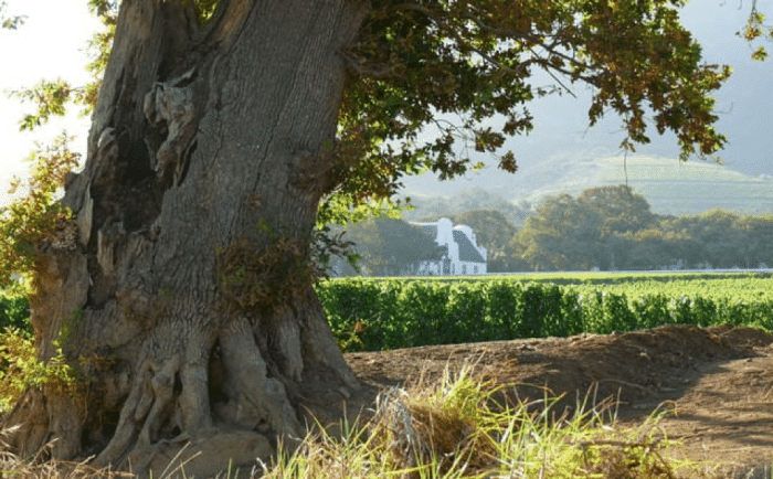 The Best of the Cape Winelands 2