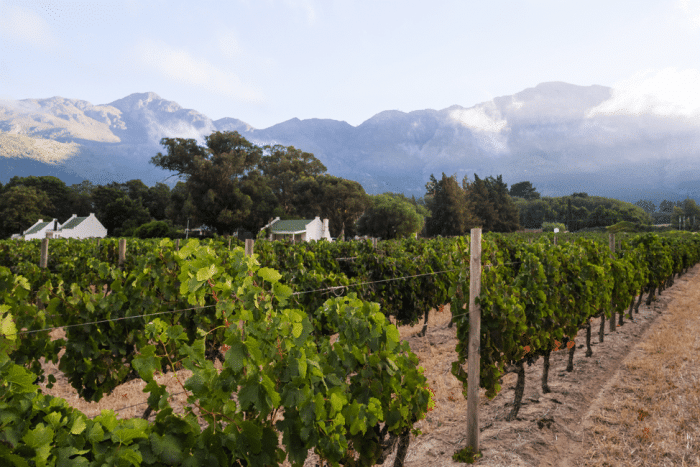 The Best of the Cape Winelands 9