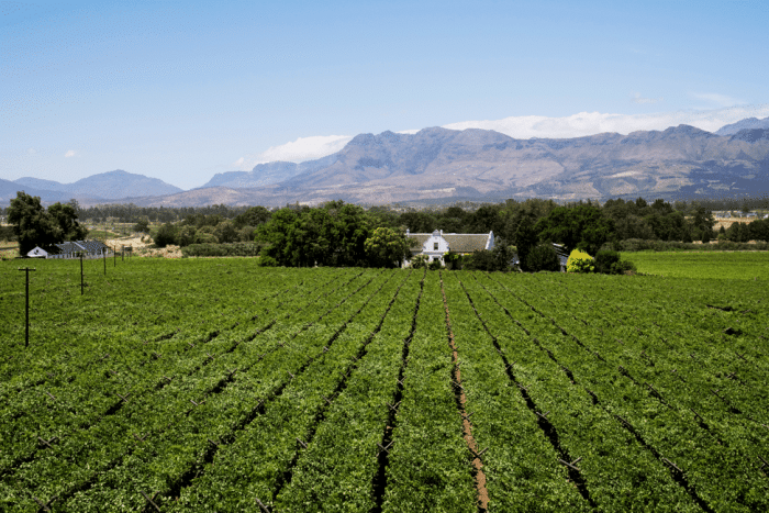 The Best of the Cape Winelands 12