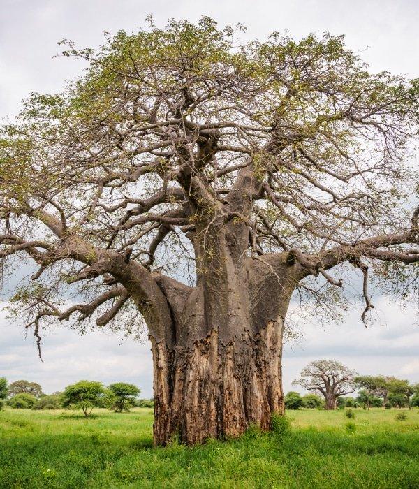 Northern Tanzania 1