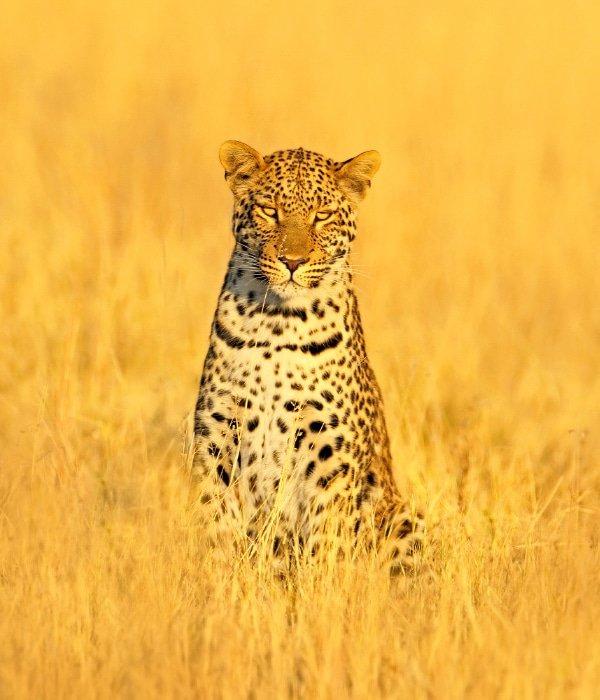 Zambian Safari 3