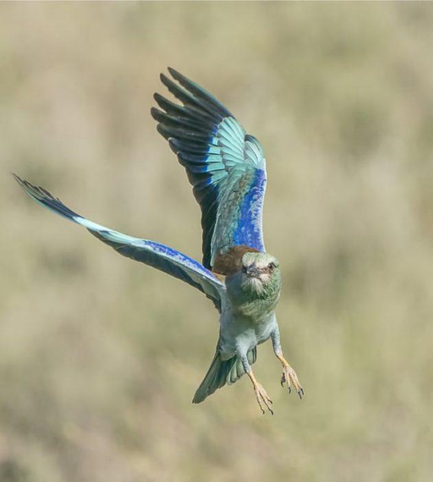 Tanzanian Bird Safari 2