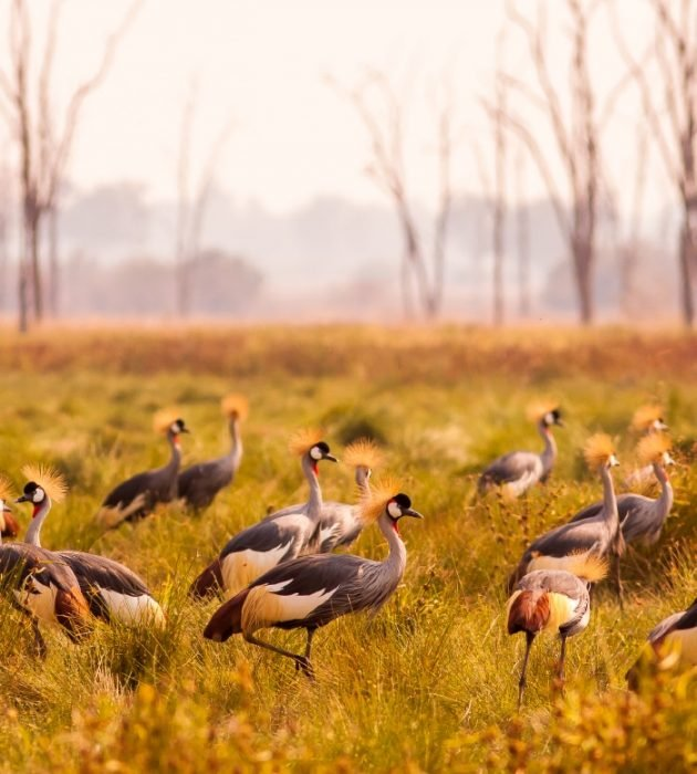 A Zim Birding Safari 4