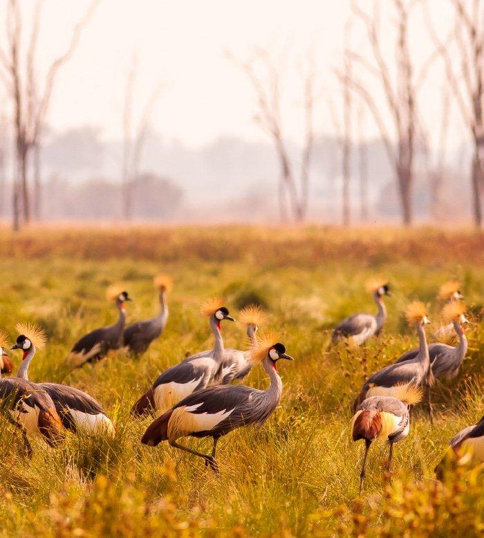 A Zim Birding Safari 2