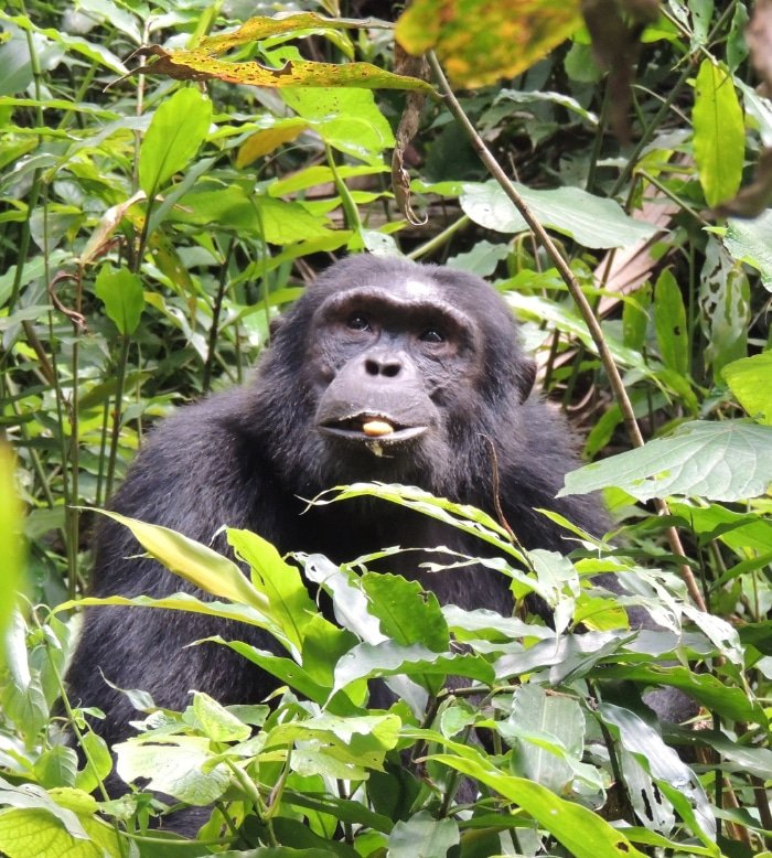 Spot a Primate 2