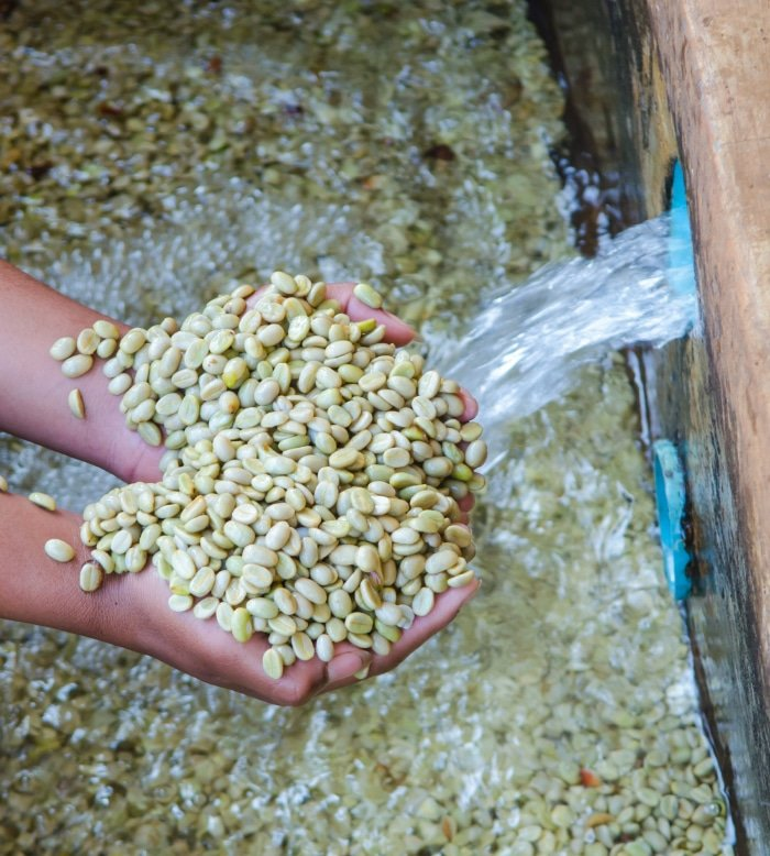 Visit a Coffee Washing Station 2