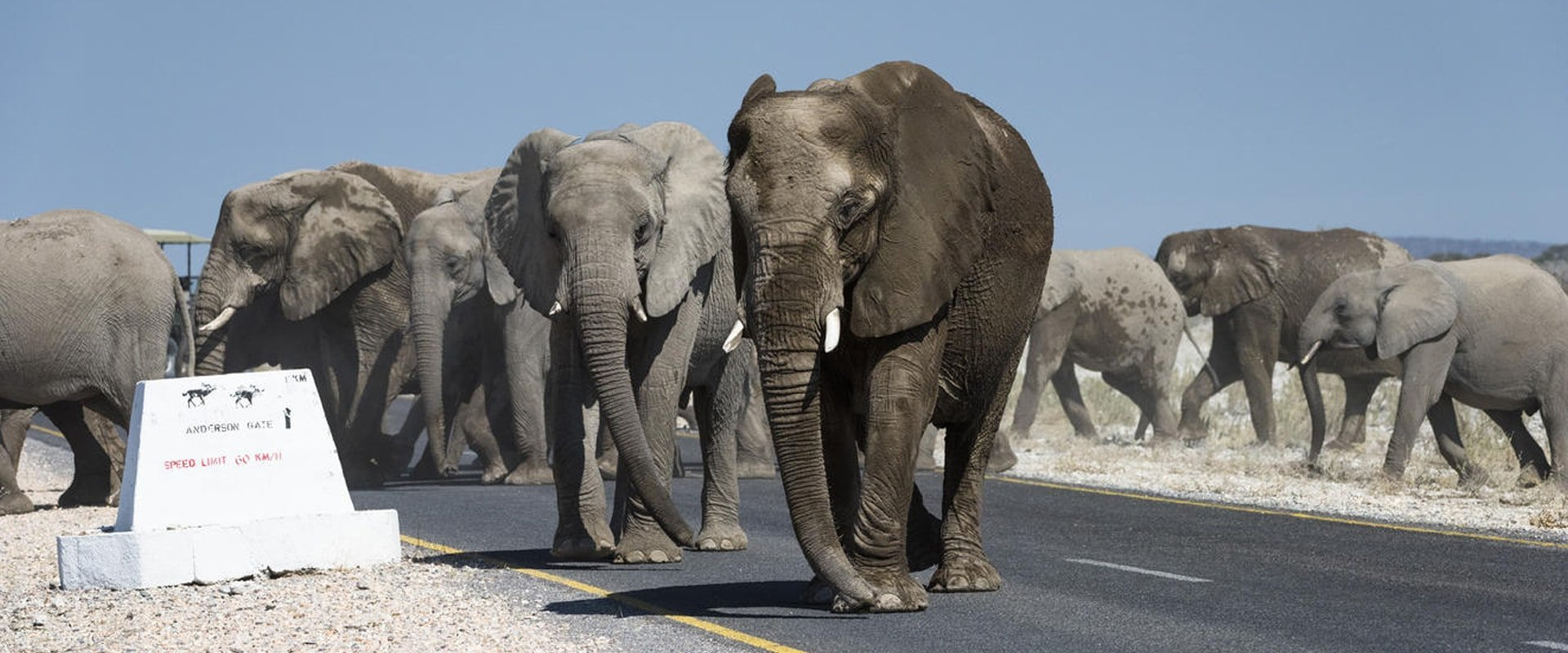 Drive through the Etosha National Park