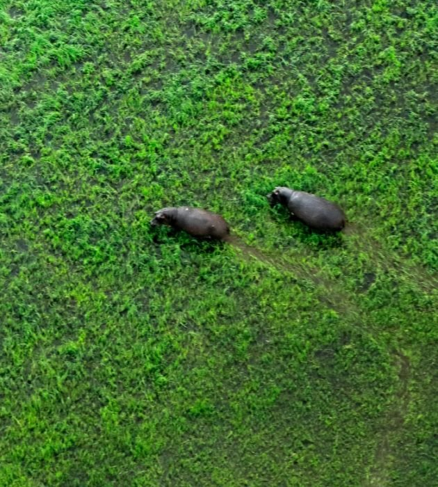 Okavango Flying Safari 9