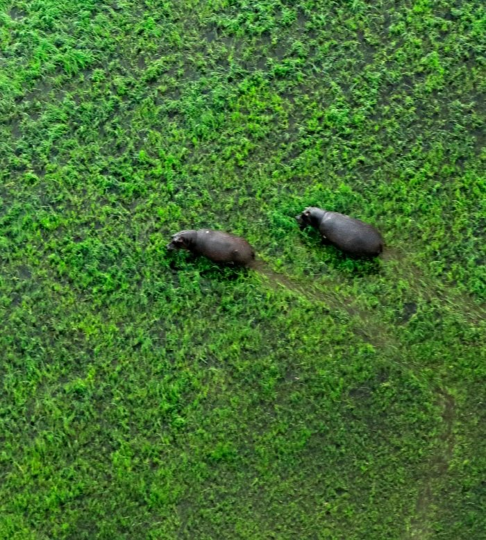 Okavango Flying Safari 5