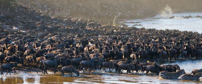 The Great Migration 1