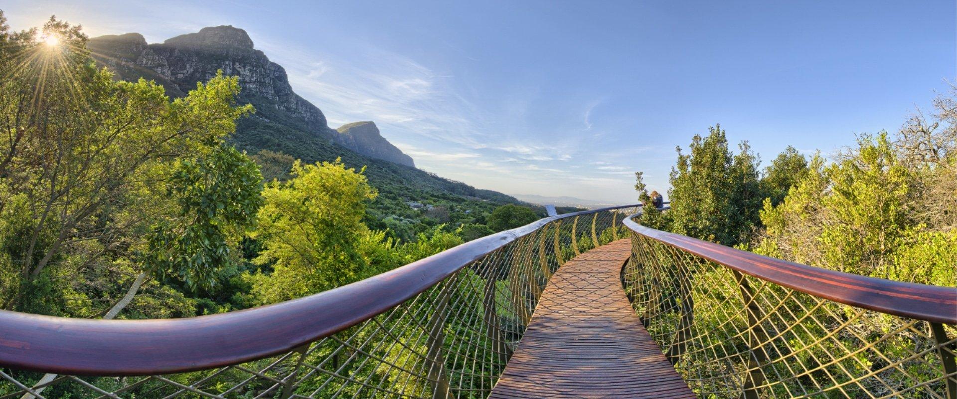 Stroll through Kirstenbosch Botanical Gardens