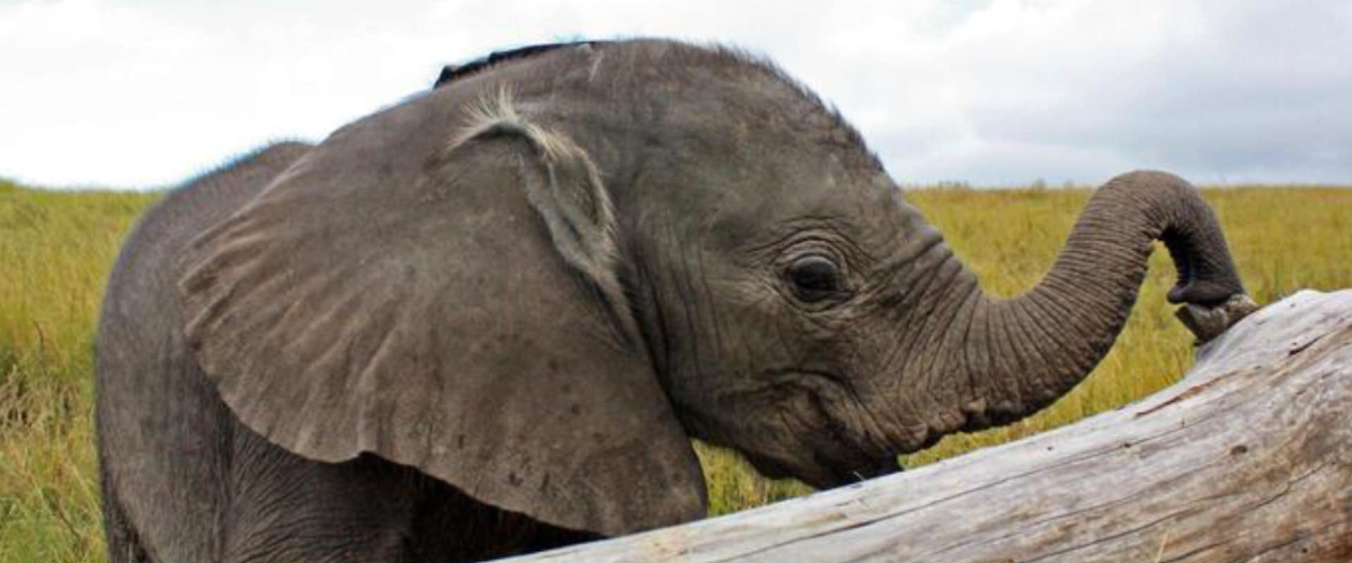 Visit the orphaned elephants in their sanctuary