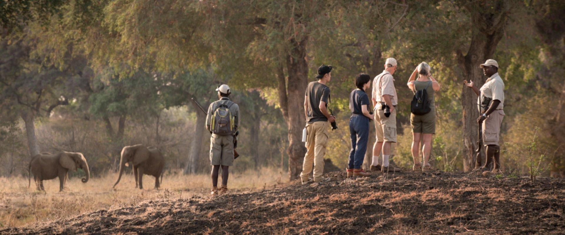Tread carefully on a walking safari