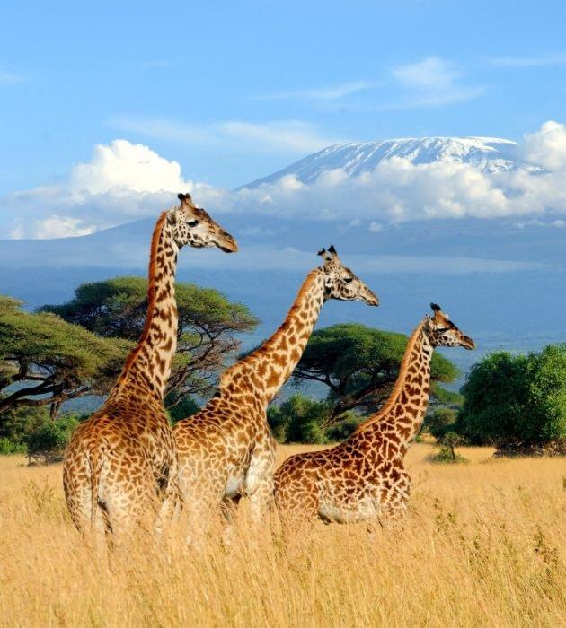 Masai Mara Safari 11