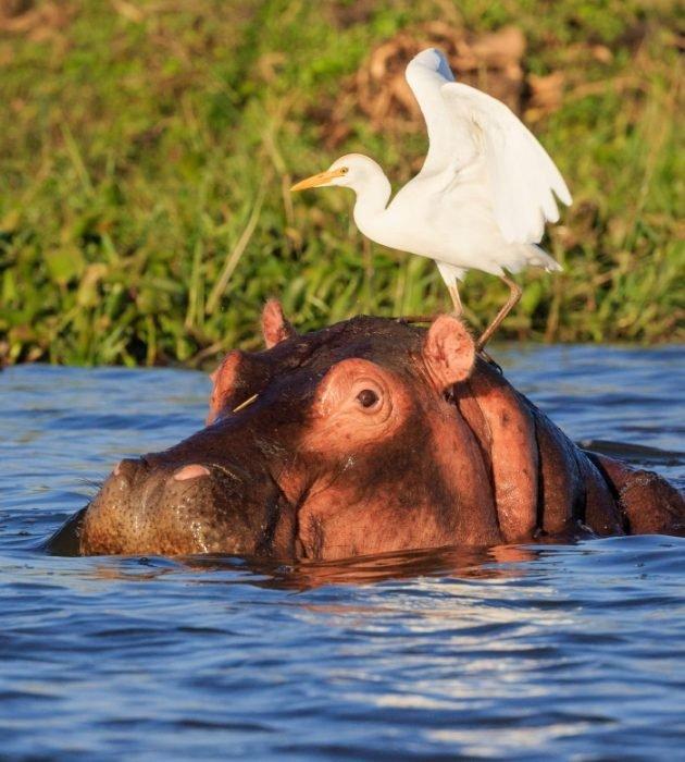 Malawian Safari 6