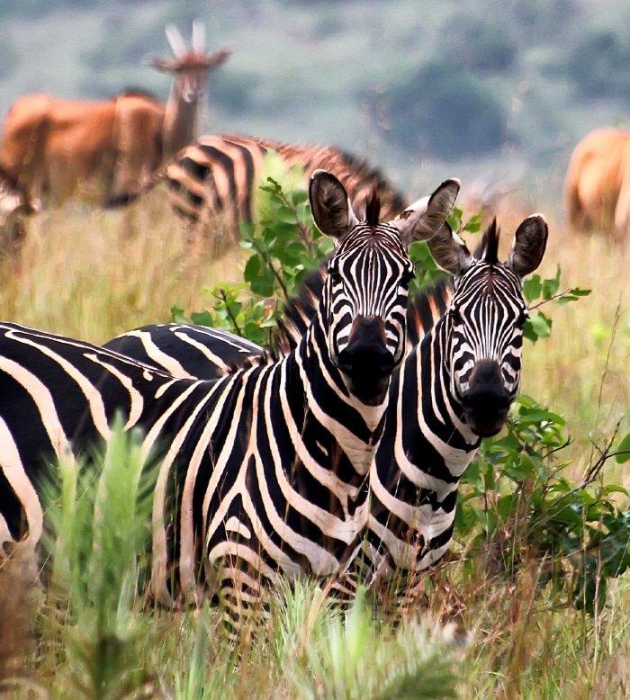 Akagera Safari 1