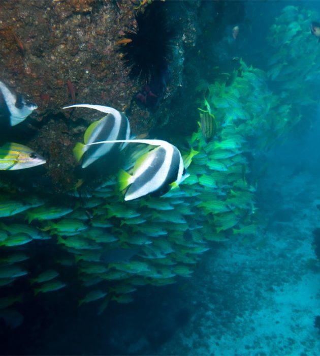 Scuba Diving 8