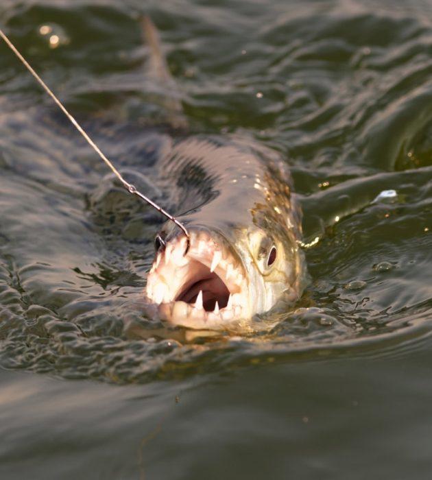 Zambezi Tiger Fishing 5