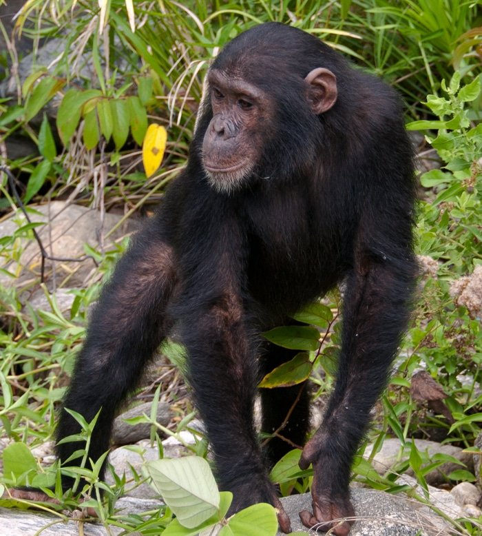 Looking Out For Primates 1