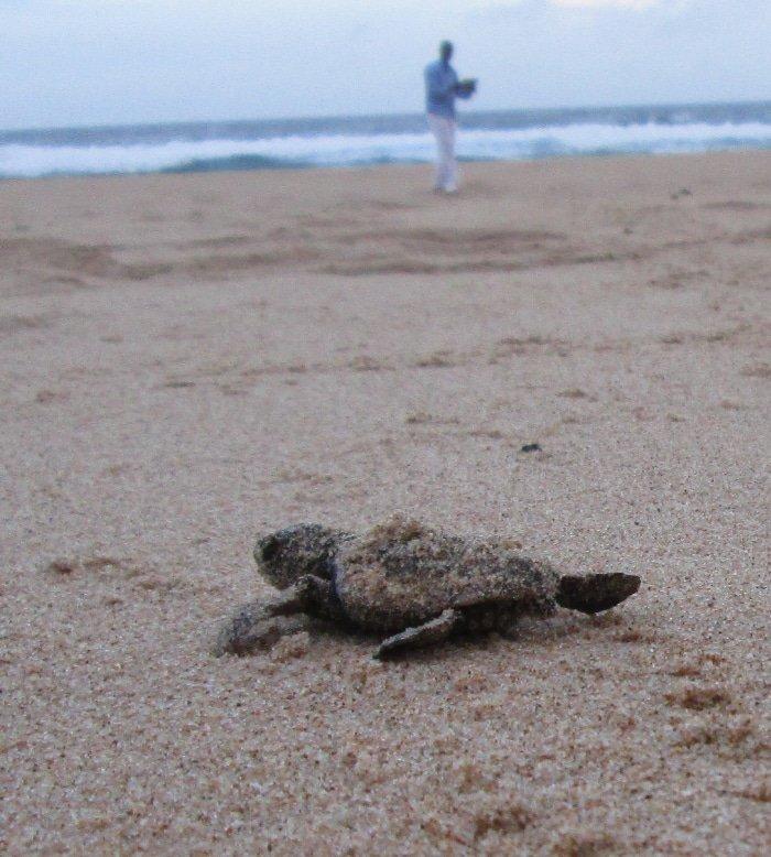 Nesting Turtles 3
