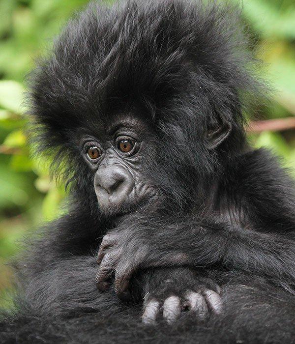 Best of Rwanda 5