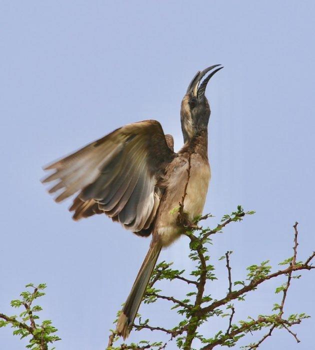 A Birder's Delight 11