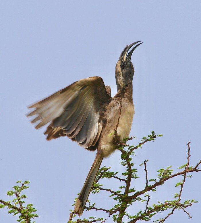 A Birder's Delight 1