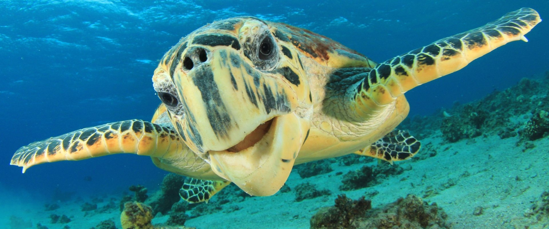 The survival outlook for Marine Turtles 2