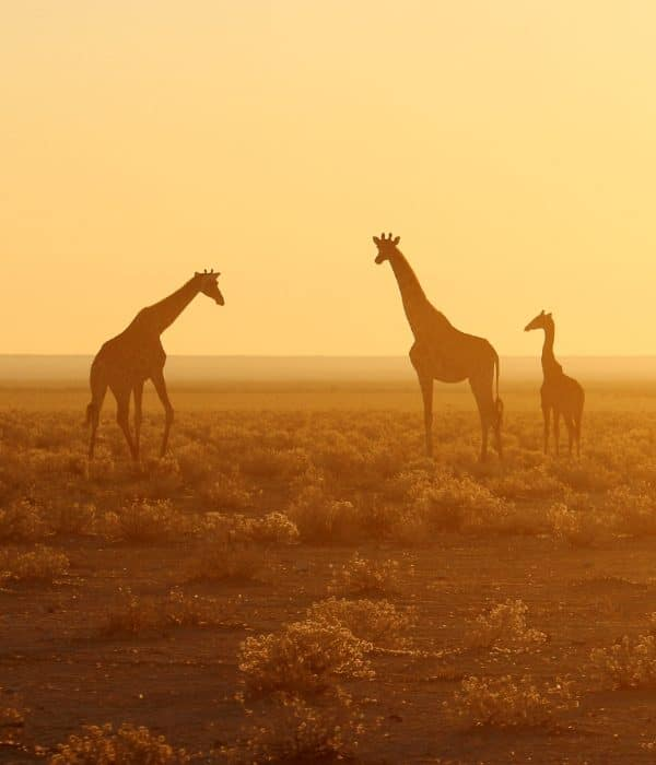 Etosha National Park 3
