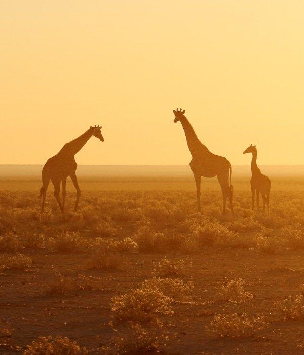 Etosha National Park 7