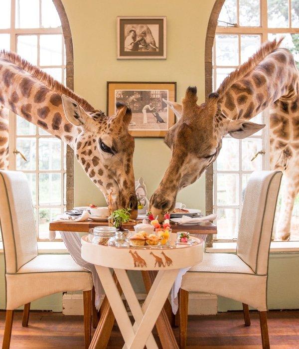 Giraffe Manor 14