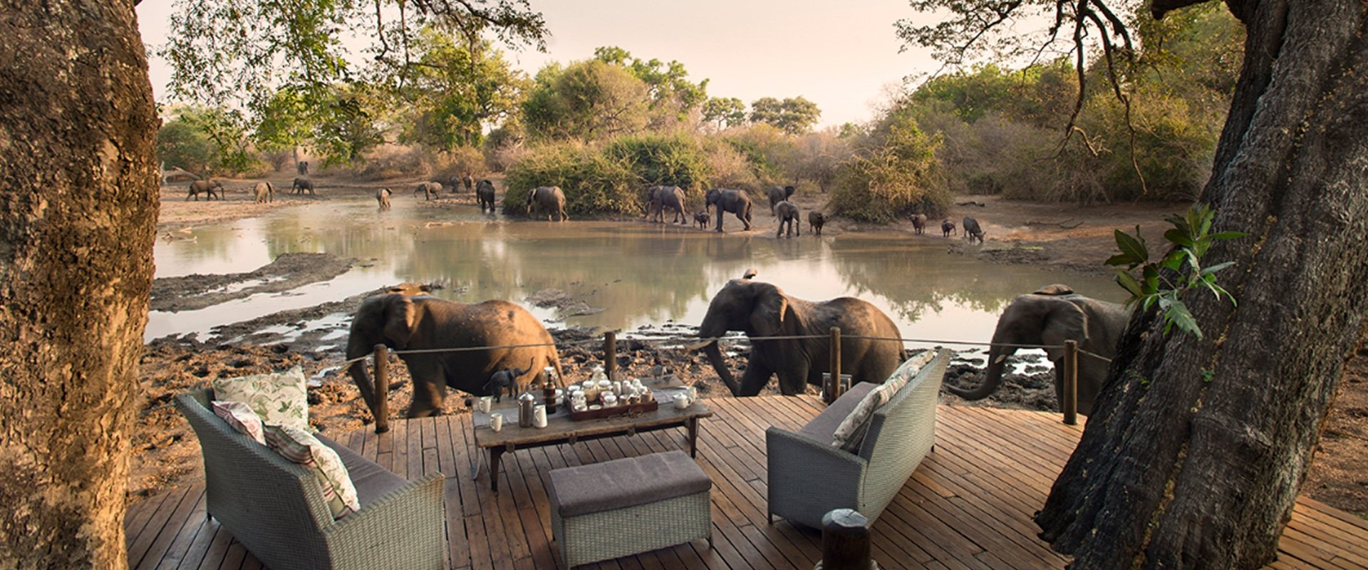 Sit back for an armchair Safari at Kanga Camp