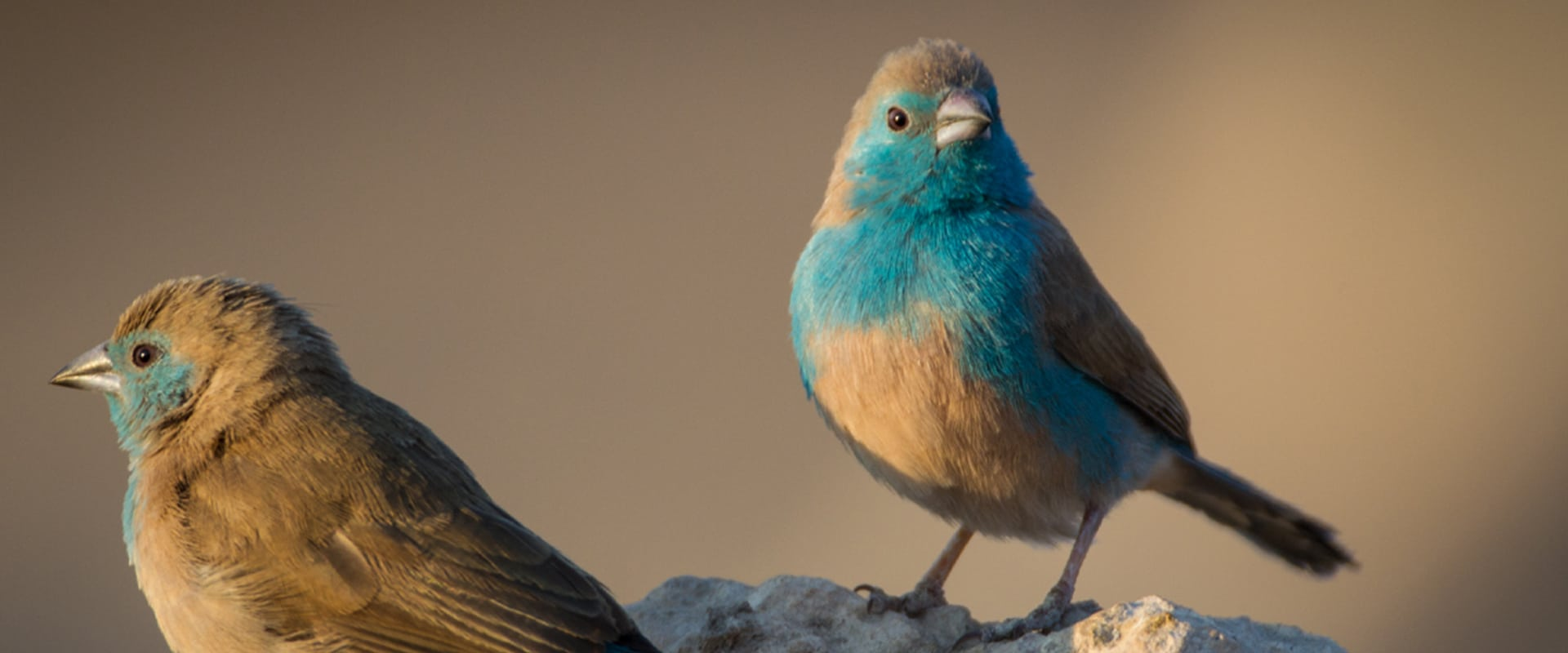 Bird watching at the wetlands