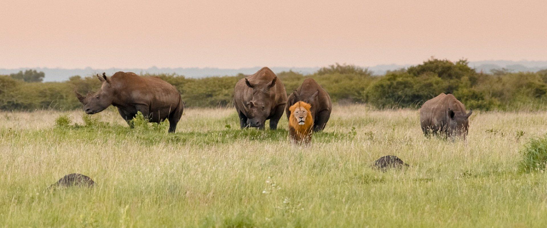 Track black rhino on foot