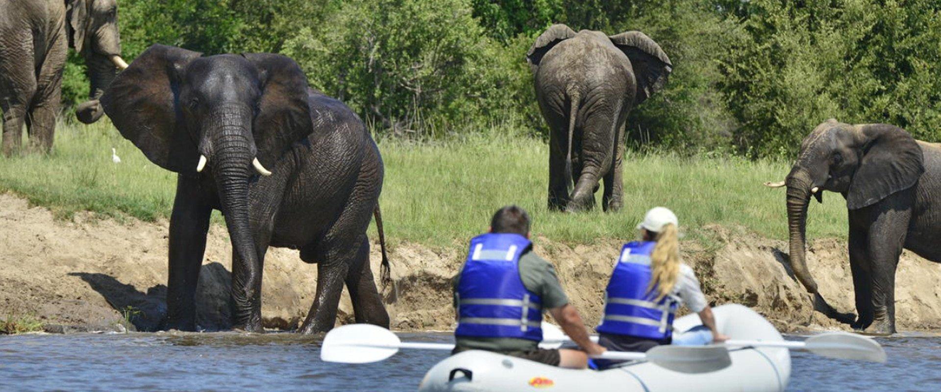 Take in the sites on a Zambezi Canoe Safari