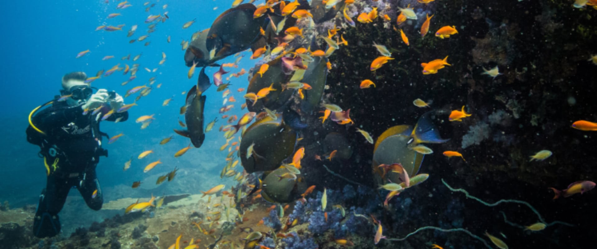 Dive or snorkel the reefs in a pristine Marine National Park