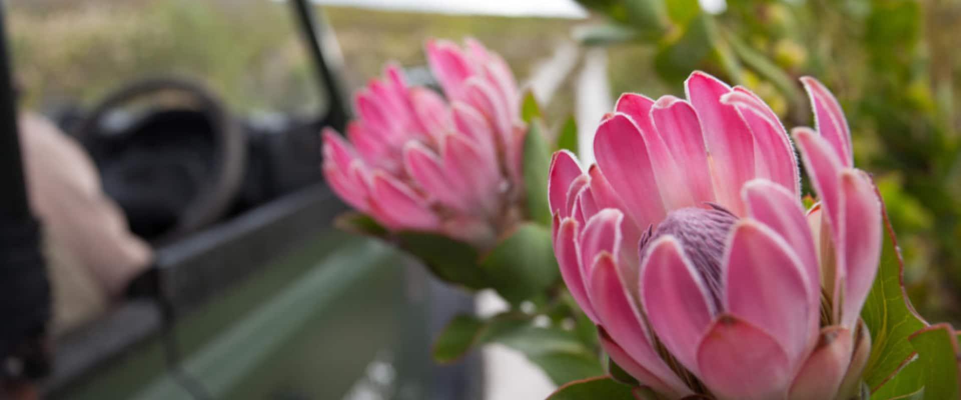 Enjoy a 4×4 flower safari on the reserve