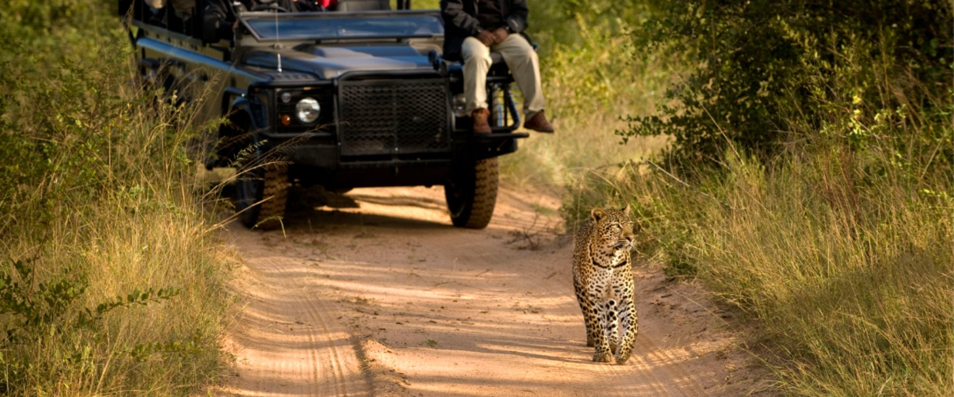 Watch the awesome spectacle of wildlife in their habitat on a game drive