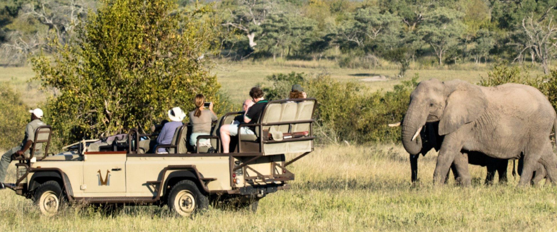 Spectacular wildlife sightings of Africa's Big 5