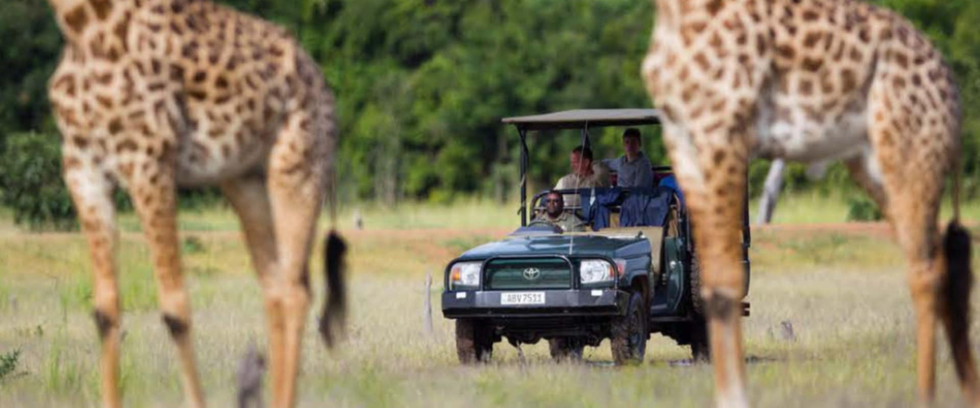 Thrilling game drives to witness world-class predator action