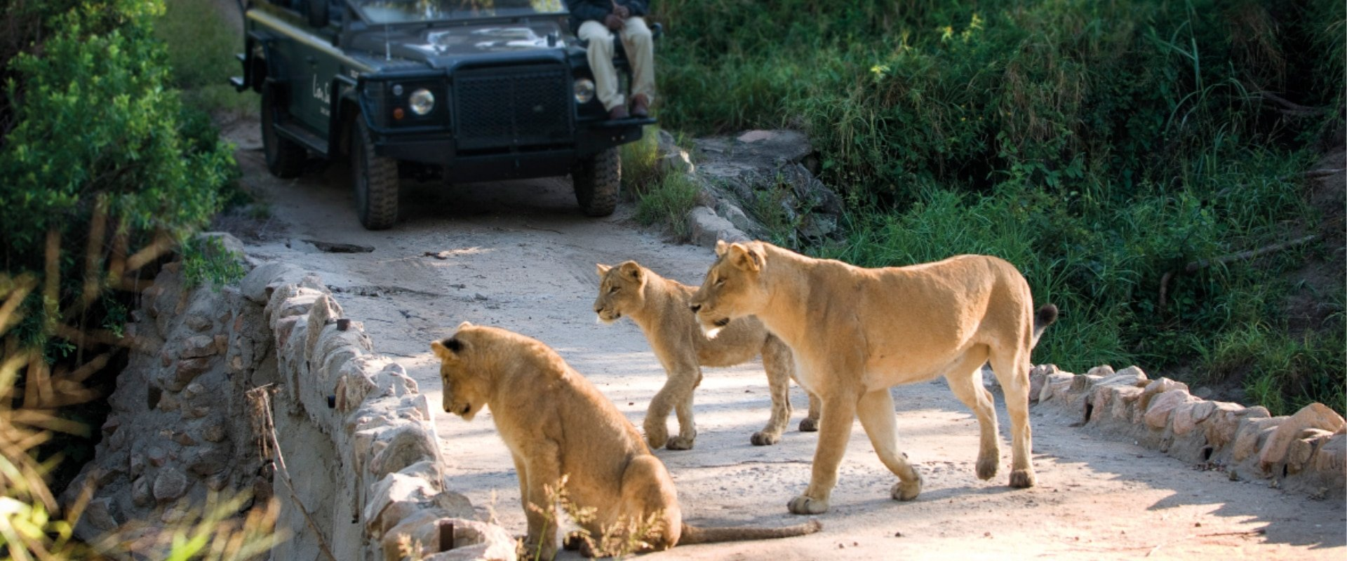 Witness the wildlife on an exciting Game Drive