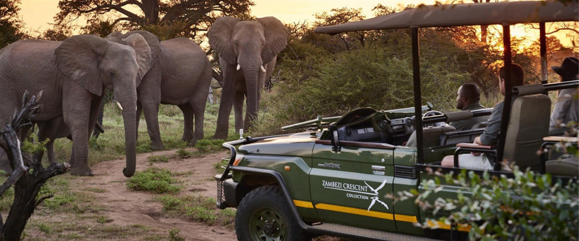 View wildlife in their natural habitat on morning and afternoon game drives
