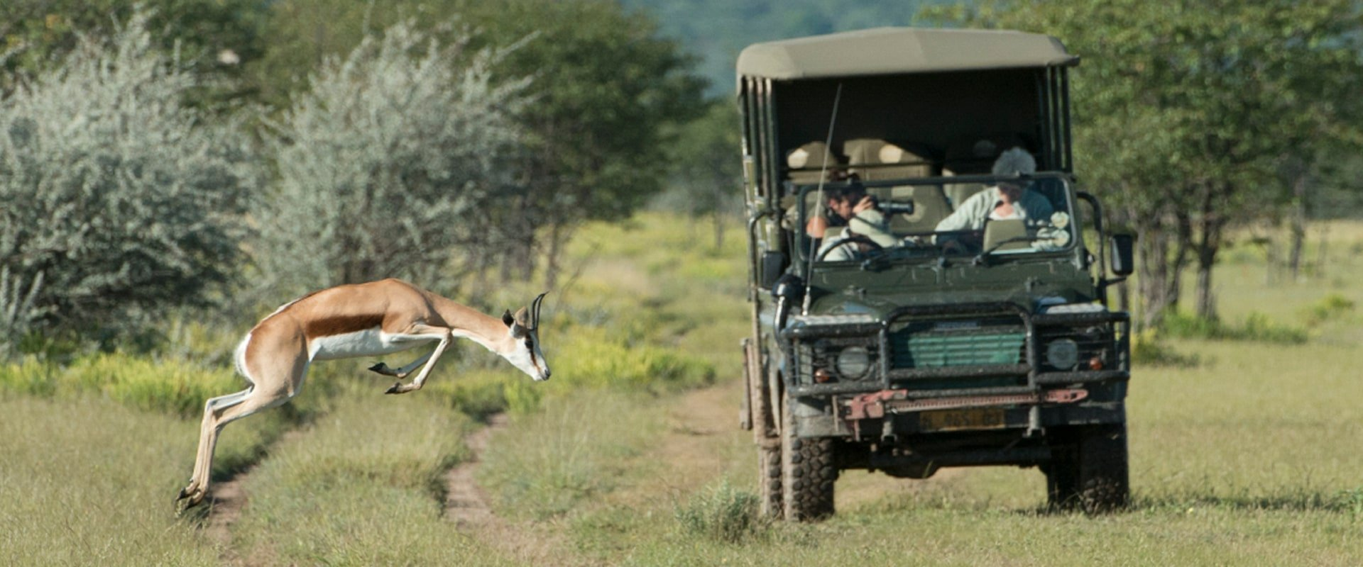 Go on a game drive of the reserve