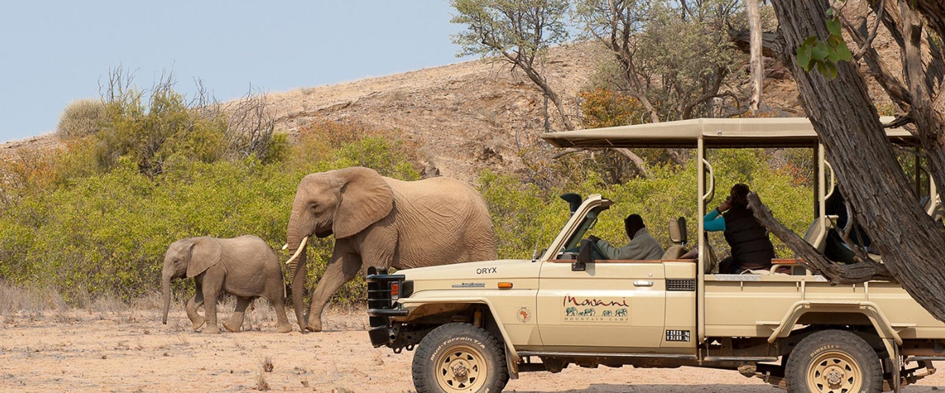 Take in the sites on a game drive