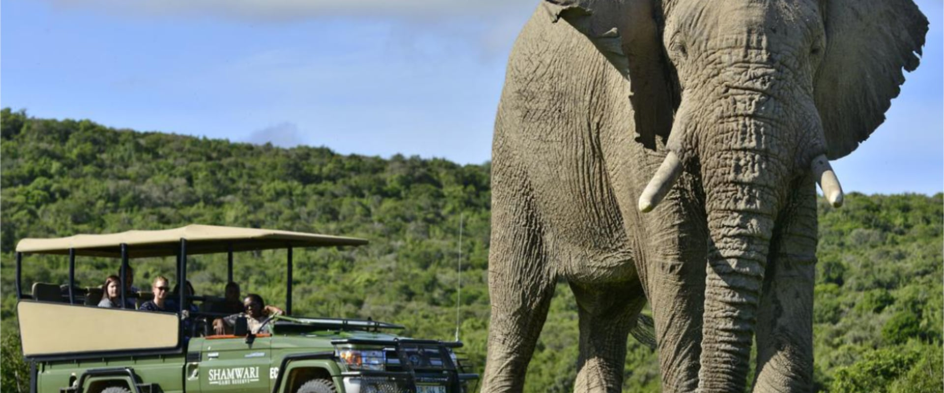 Watch the awesome spectacle of wildlife roaming free on a game drive